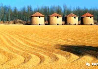 玉米收储政策落地 一定要关注政策导向和临储库存量