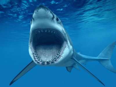 鲨鱼攻击 你或许误解了一些事情