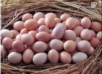 煮鸡蛋美容 刚煮熟的鸡蛋竟然是最廉价的美容方式