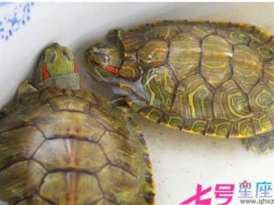 乌龟死在家里是吉是凶 养的乌龟死了会倒霉吗