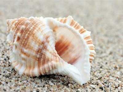 田螺地风水出什么人才 梦见田螺、螺蛳、海螺