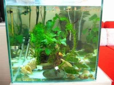 家里养什么鱼招财 室内养金鱼的风水寓意你一定要知道